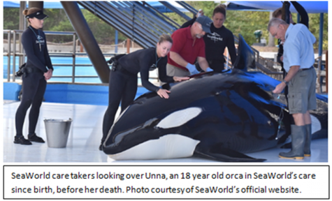 SeaWorld to end killer whale captivity