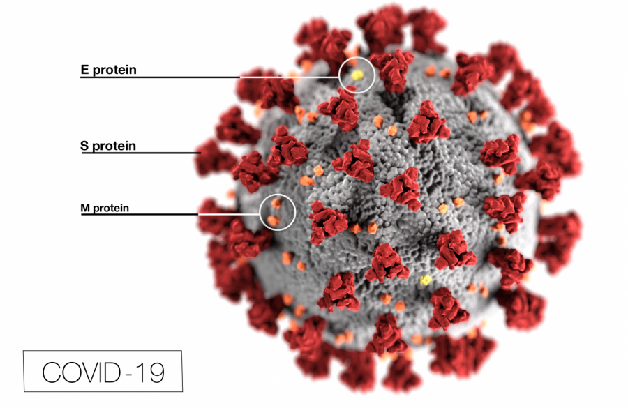 This illustration, created at the Centers for Disease Control and Prevention (CDC), reveals ultrastructural morphology exhibited by coronaviruses.